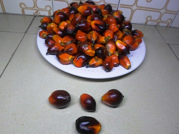 banga seeds